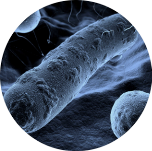 Molecular Microbiology and Infectious Disease