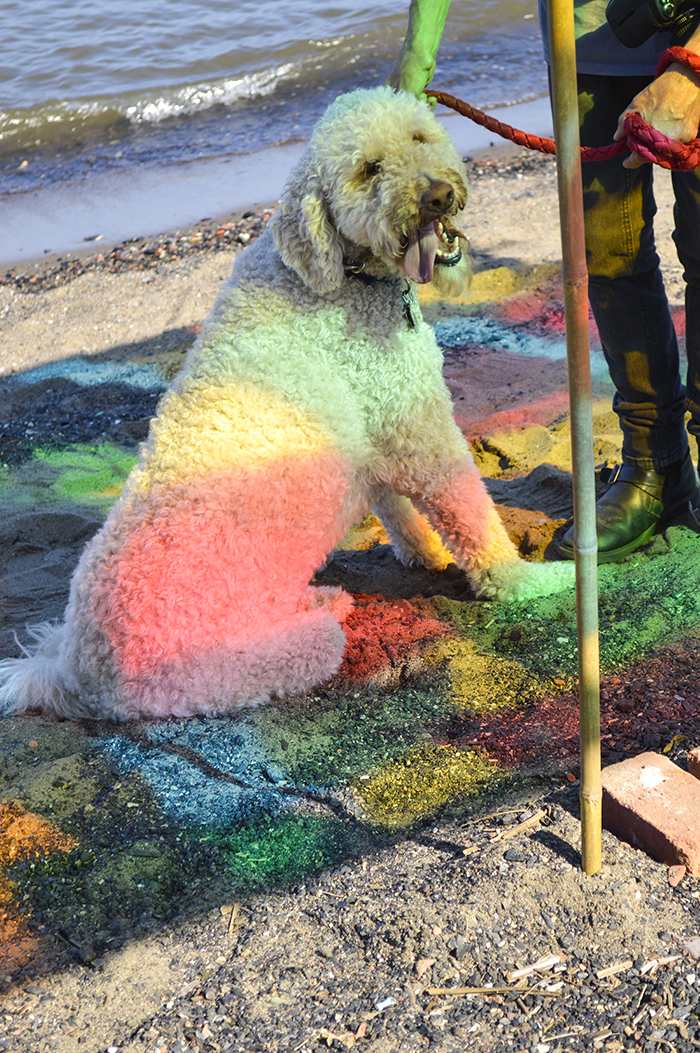 This dog has the right idea to sit under the Susan Luss and Richard Vivienzo sculpture. Behold the first rainbow dog.