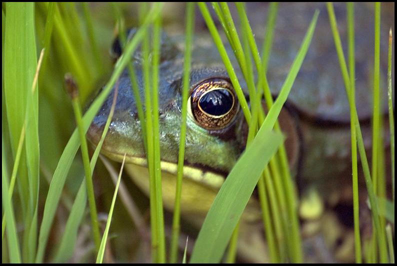Unk. Frog, Lathrup Village, MI
