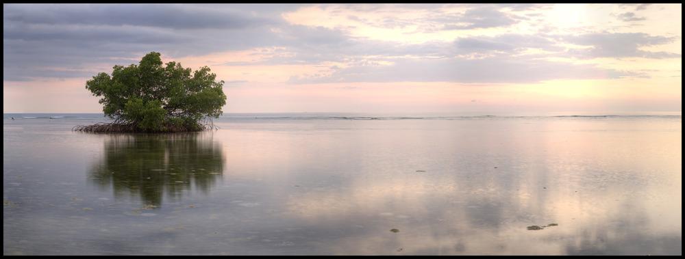 Font Hill Nature Preserve, Jamaica