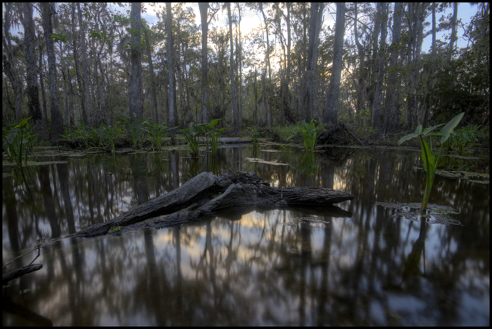 Bayou near Lake Maurepas, LA