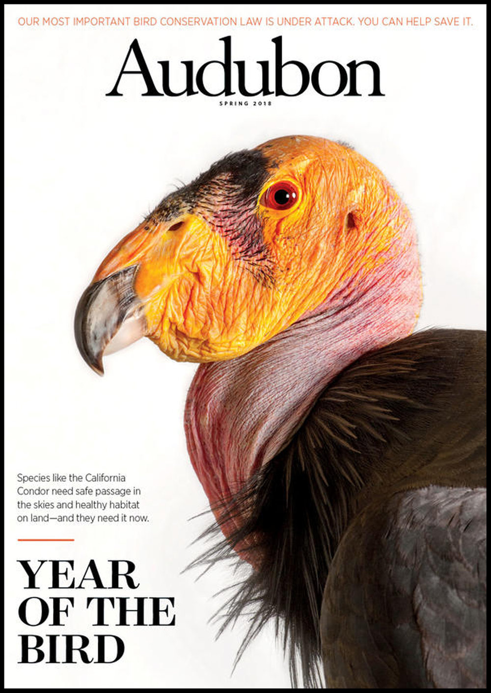 Year of the Bird.jpg