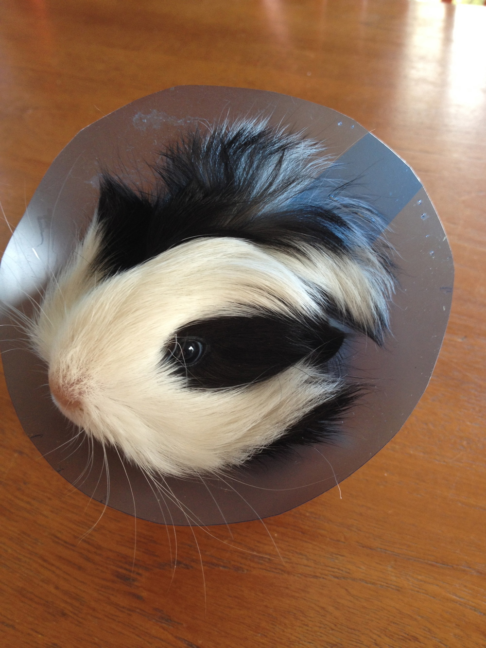 Gah! The cone of shame.