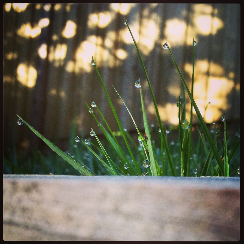 Ooh pretty new baby grass laden with dewdrops - expertly placed by magical dew fairies