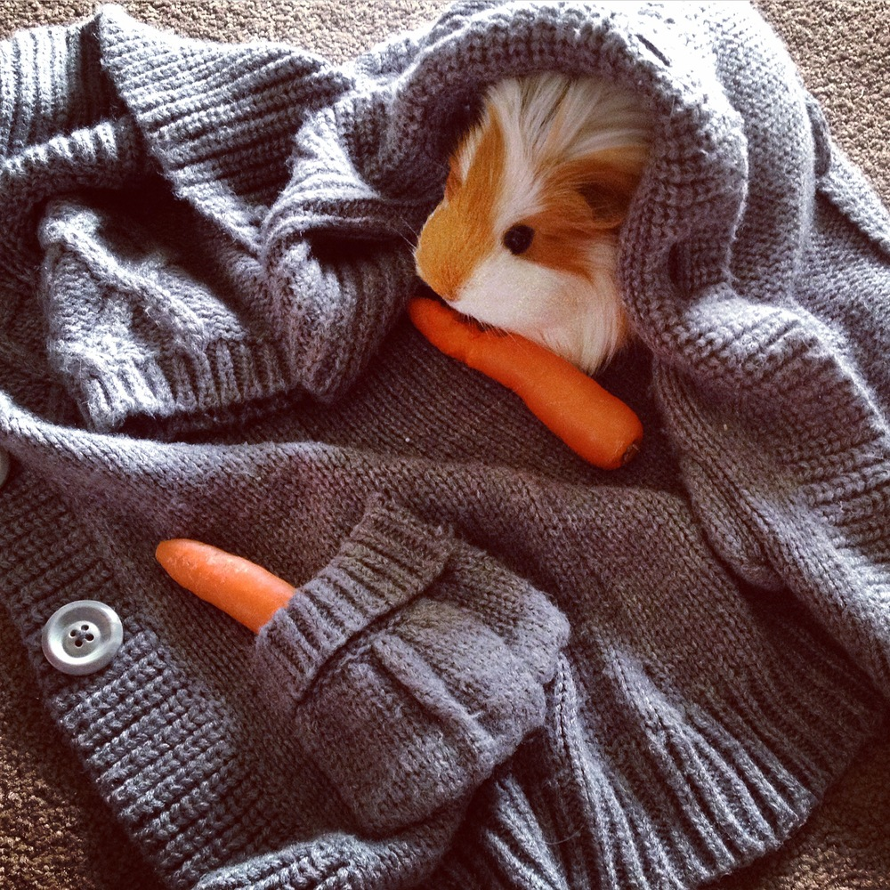 Comfy.  - In my favourite cardi... with convenient food pockets.