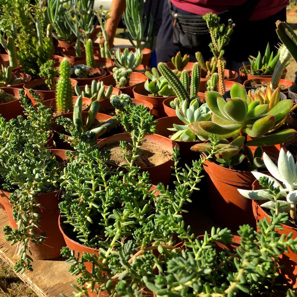 cactusdaylesfordfarmersmarket.jpg