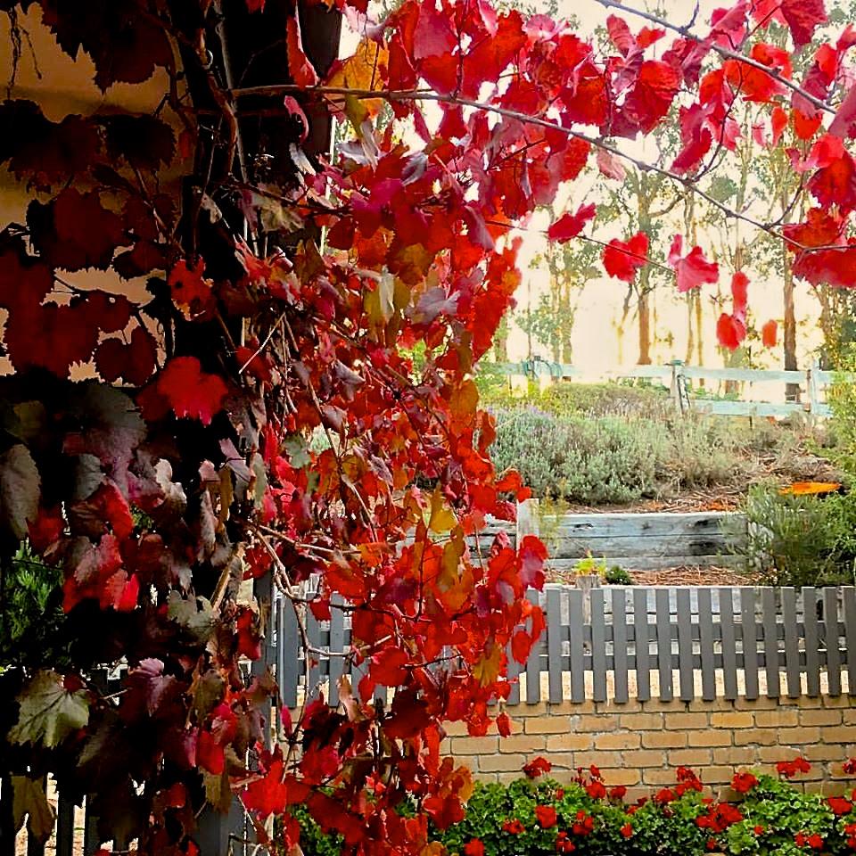 autumnglory.jpg