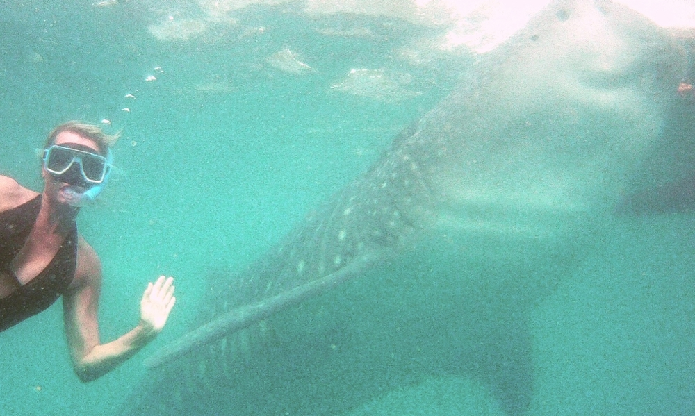 Whale shark diving in Oslob, Cebu, Philippines.