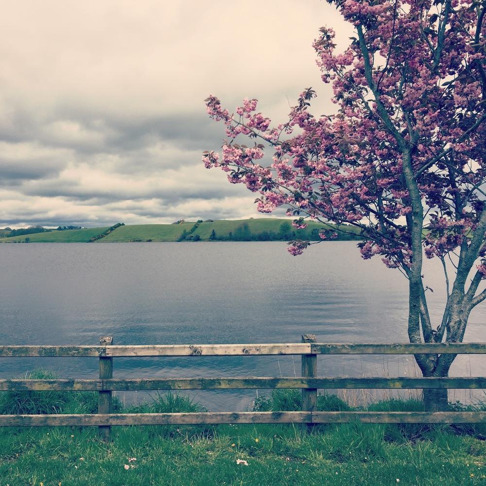 Undiscovered beauty of Castleblayney, Ireland.