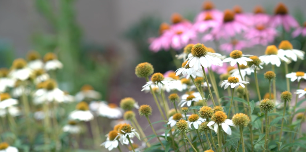 NOB garden in summer