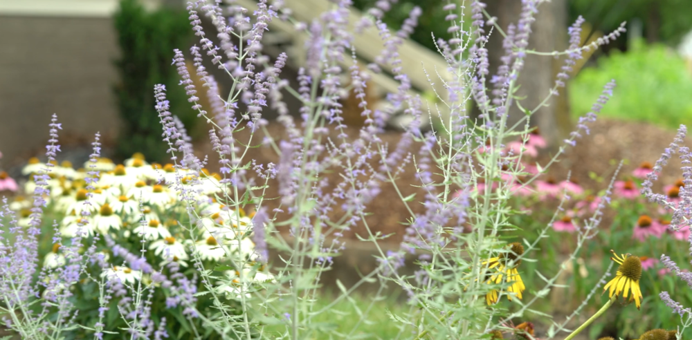 Drovers Garden.png