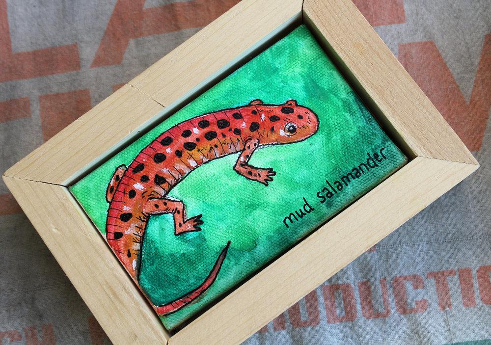 mudsalamander1.jpg