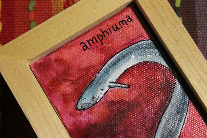 amphiuma3.jpg