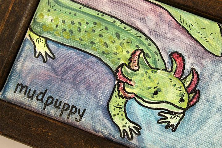 mudpuppy6.jpg