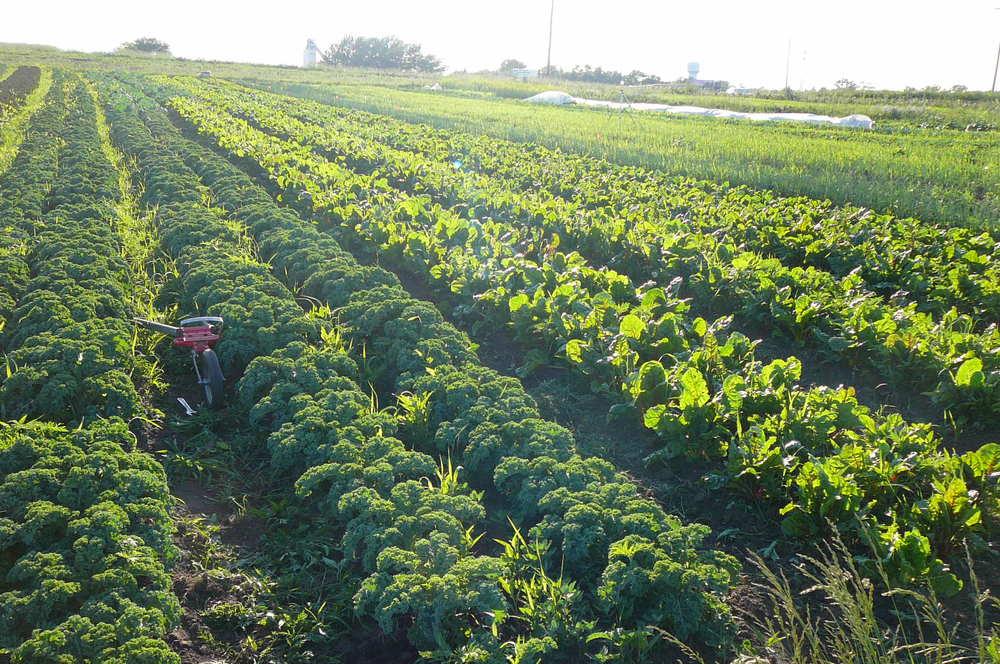 organic farm.jpeg