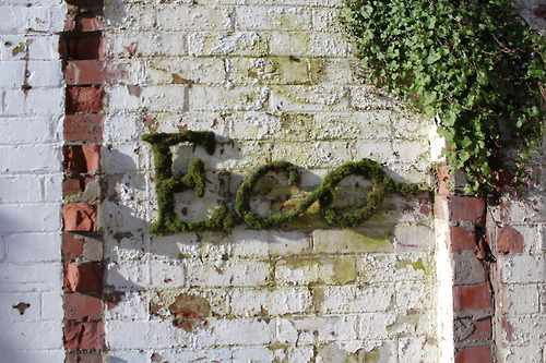 Eco, 2013  Typography lettering commissioned by Canta Magazine, Eco issue. Grown and formed moss letters.