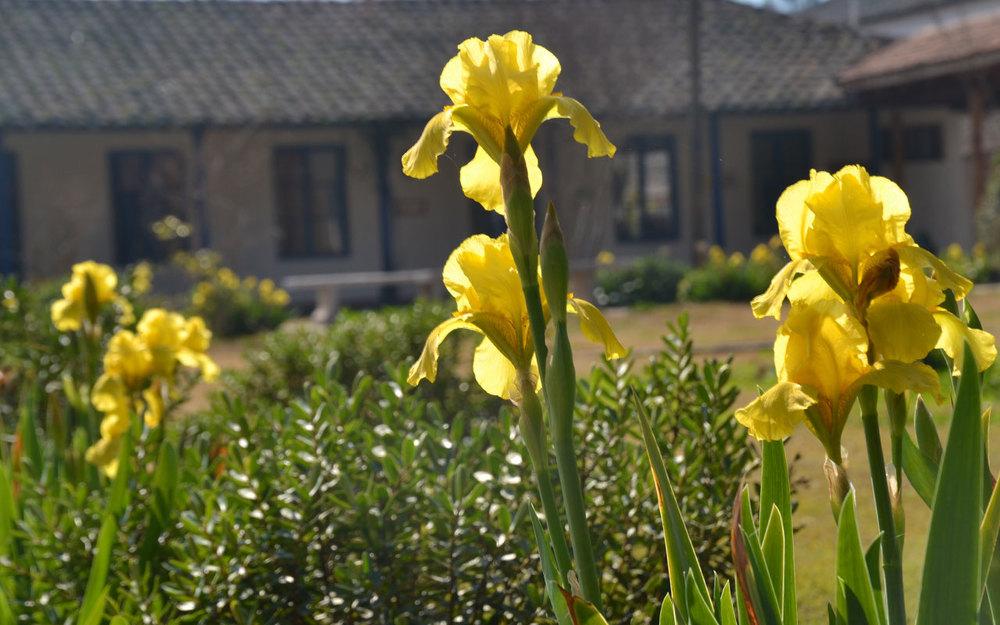 patio-flores-easv.jpg