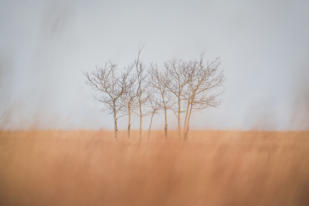 steve_seeley-prarie_trees.jpg