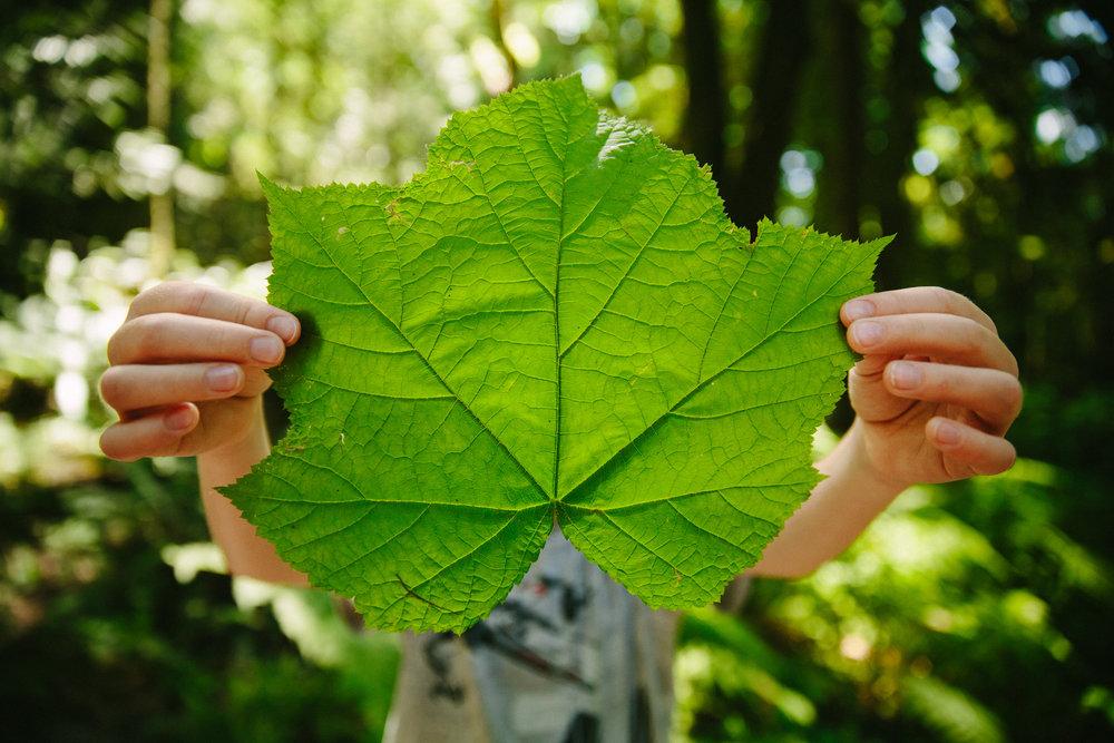 steve_seeley-forest_leaf.jpg