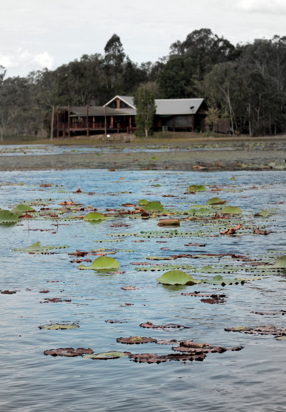 The lagoon and its lilypads by boat.