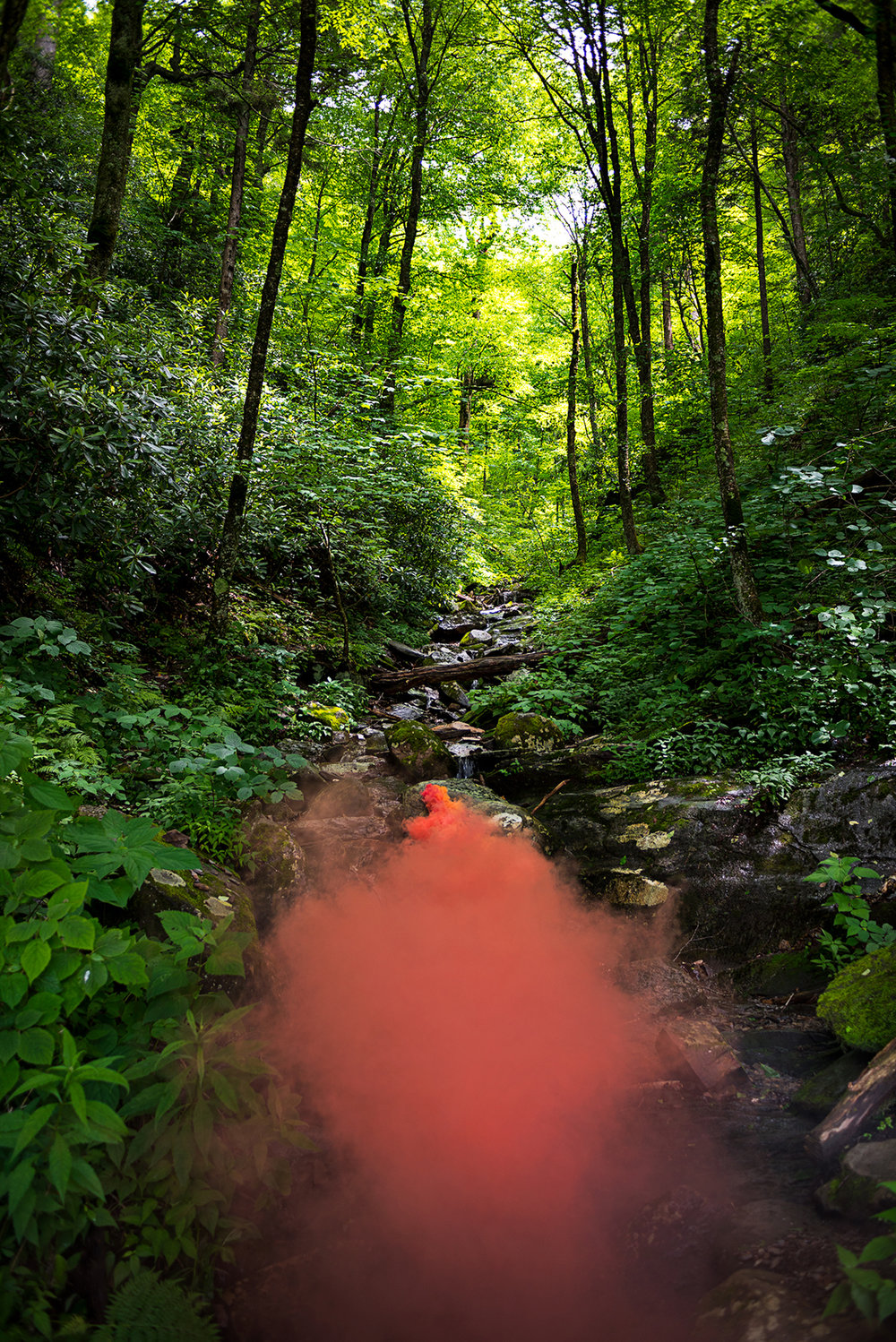 Irby Pace, Smoky Mountains, 2018