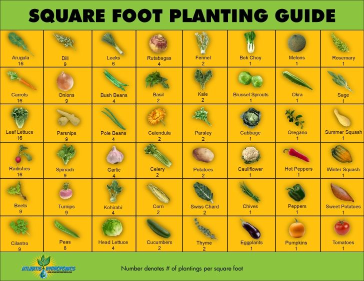 Workshop   June 8th Square Foot Gardening