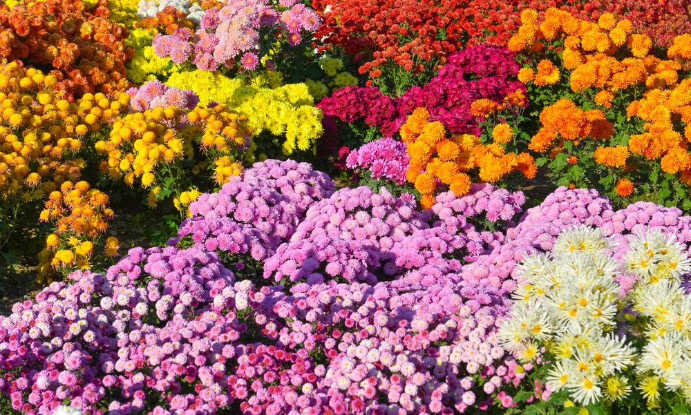 flowergarden_69434280.jpg