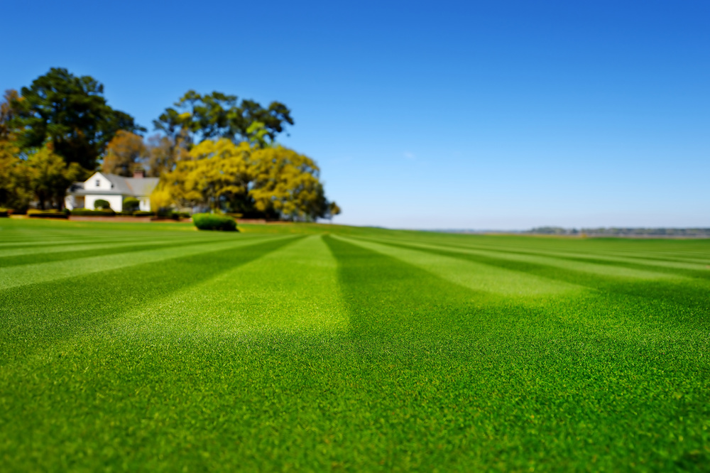Naturally occurring microbes in TurfPro+™ make it ideal for commercial and residential turf. The root systems become larger and are able to pull more nutrients from the soil leaving less to run off into watersheds and streams.