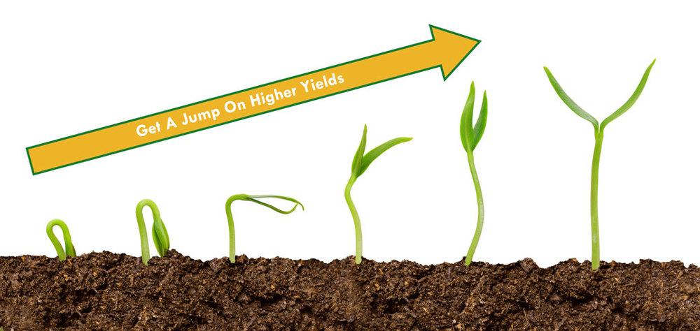 Seedlings-in-progression-with-arrow.jpg