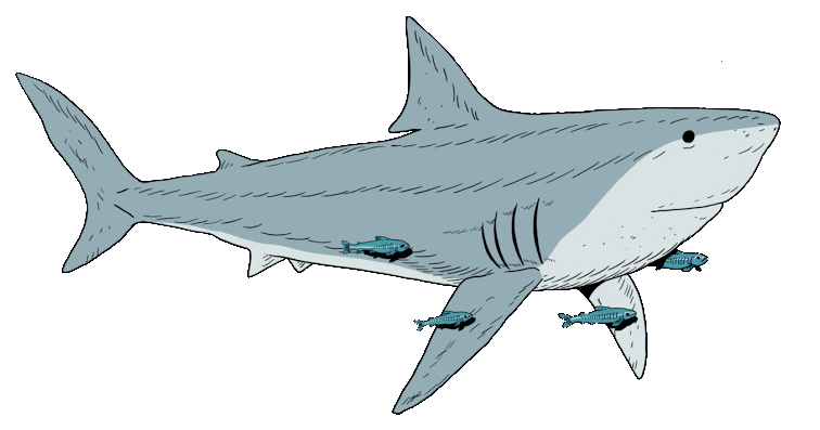 Chad logo full shark crop.png