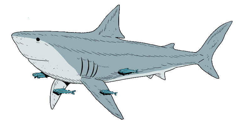 Chad logo full shark crop2.png