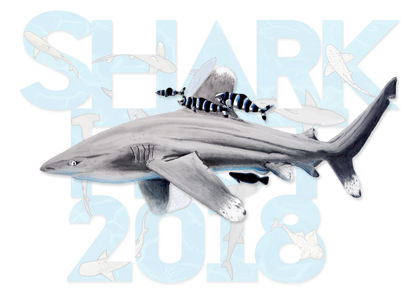 1. Sharkfest calendar cover chad.png