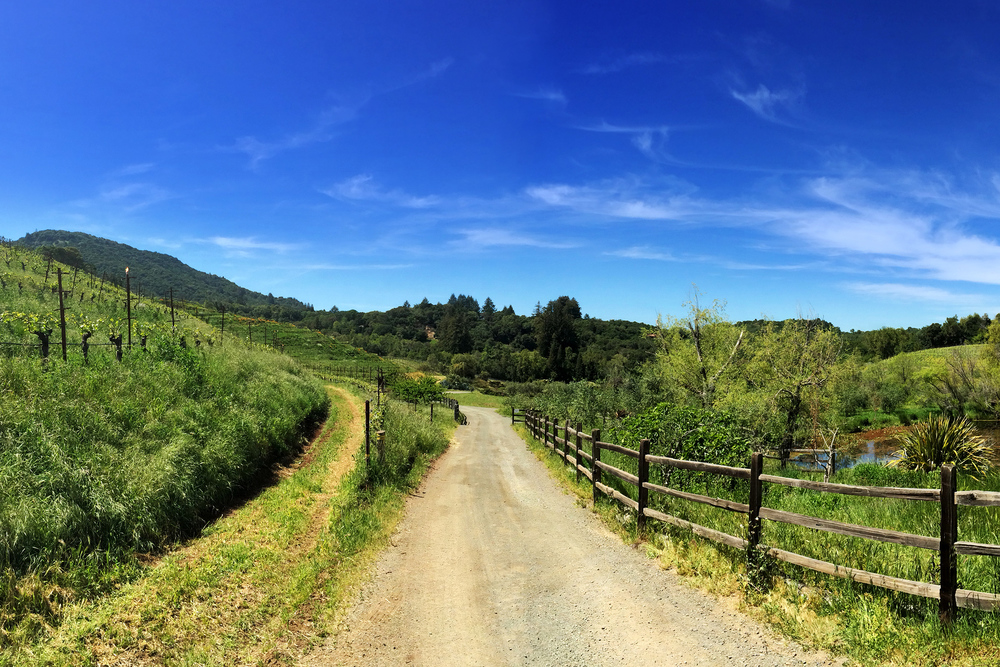 A vineyard in the Sonoma Valley