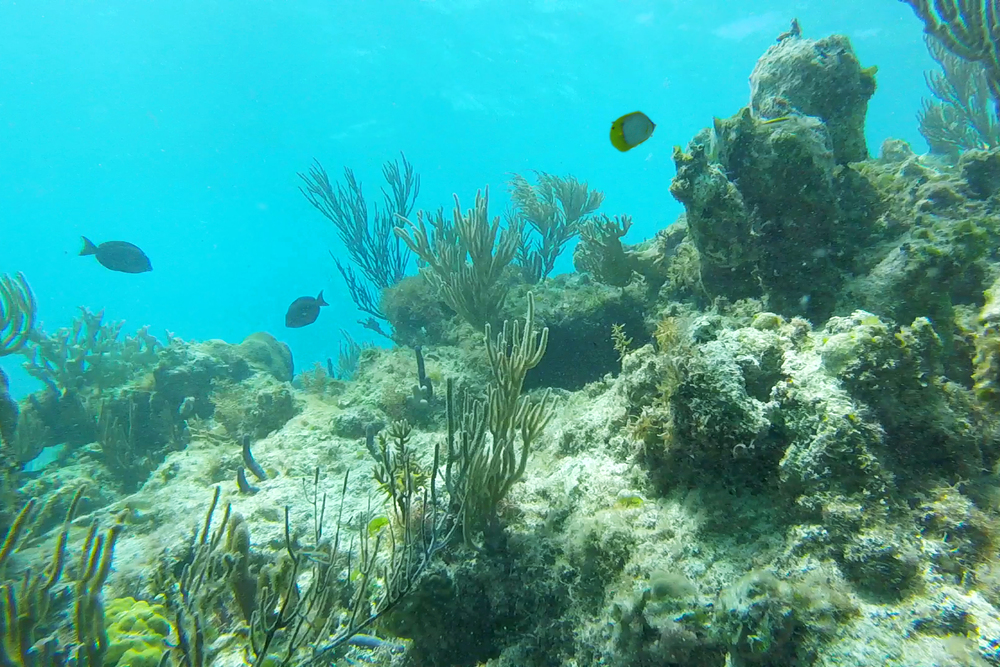 The coral reef in Grace Bay, Turks & Caicos Islands