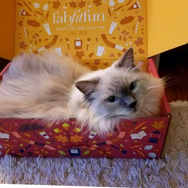 Cute critters in @fabfitfun boxes!