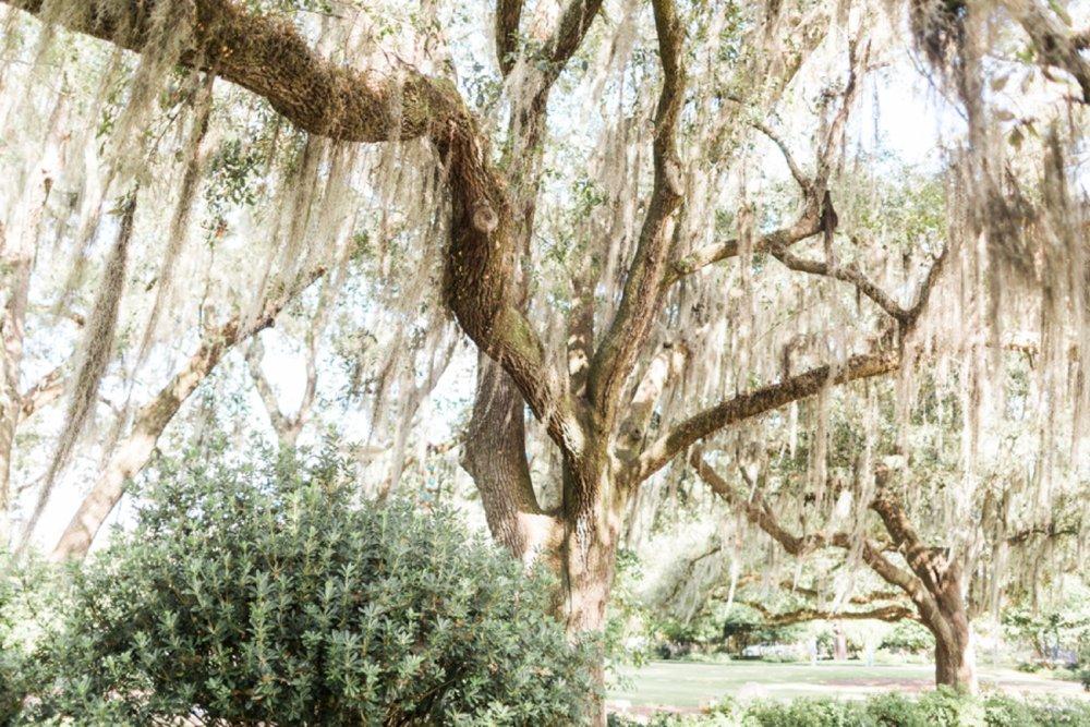 city-park-new-orleans-destination-wedding-photographer_9755.jpg
