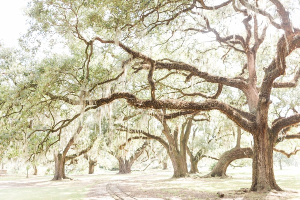 city-park-new-orleans-destination-wedding-photographer_9763.jpg