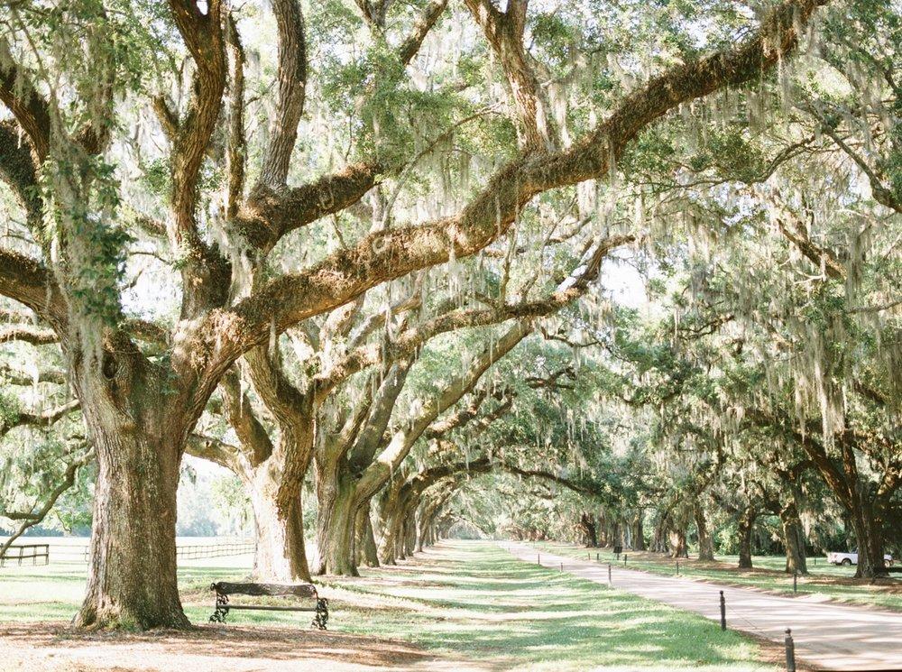 Charleston-South-Carolina-Wedding-Photographer-Destination-Wedding-Photography_5193.jpg