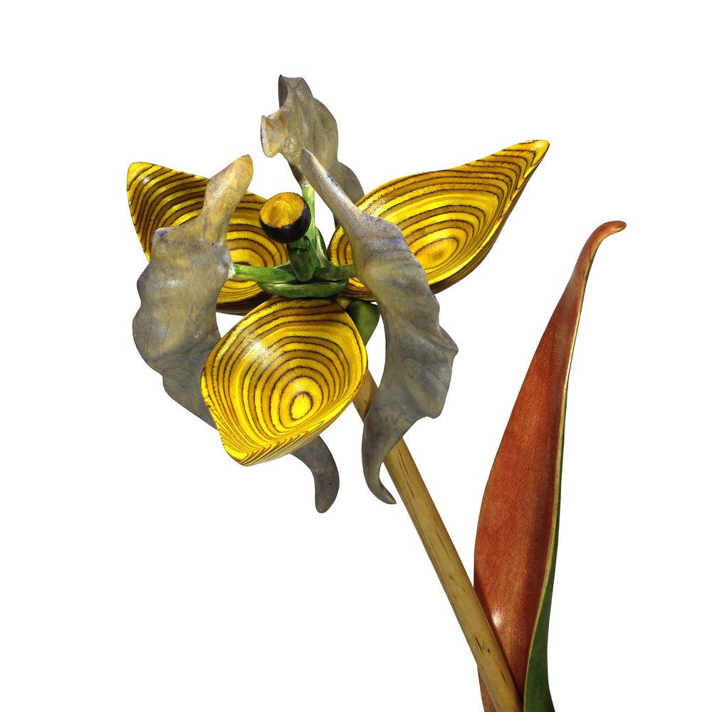 Bloom #17 by Sam Hingston