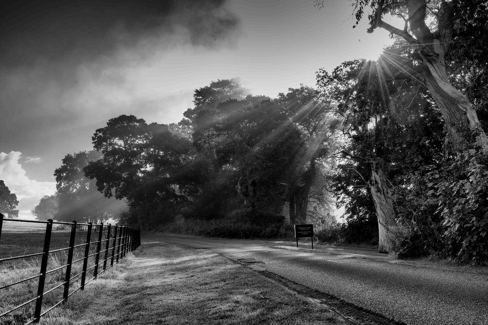 Sun rays stream through the tree as Dinefwr Park