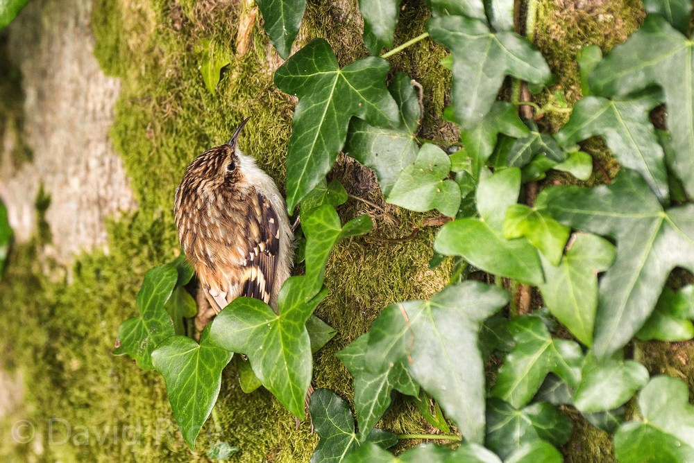 A friendly Tree Creeper!