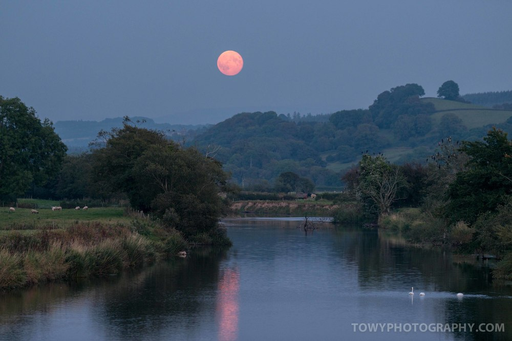 Super Moon or Harvest Moon rises over the river Towy in Carmarthenshire