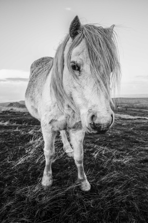 Fujifilm Pony number 2