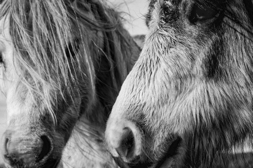 Fujifilm Pony number 3