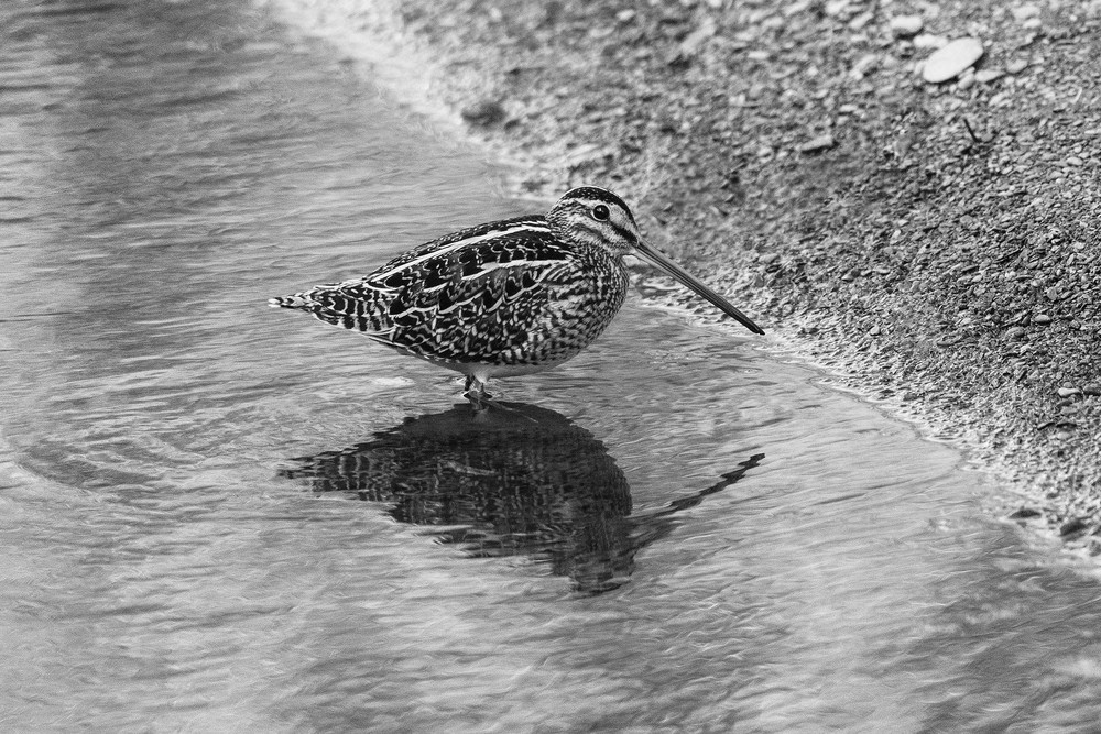 A Towy Snipe, glad to see the back of the shooting season