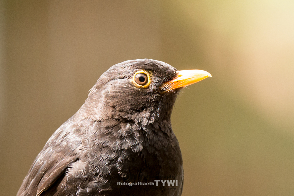 Black Bird Portrait