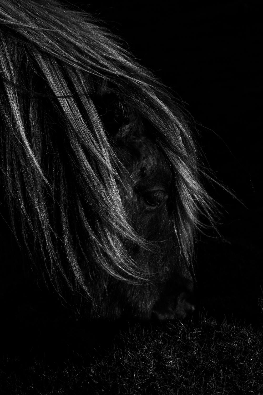 20150102_Landscape_CarregCennen_Horse-2.jpg