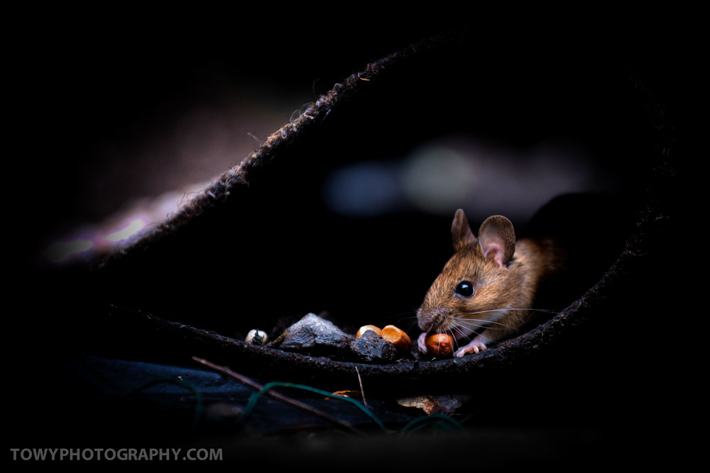20150125_Wildlife_Mouse-2.jpg