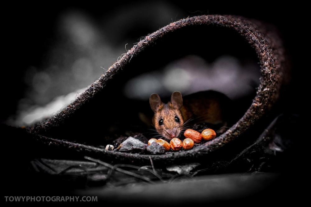 20150125_Wildlife_Mouse-3.jpg