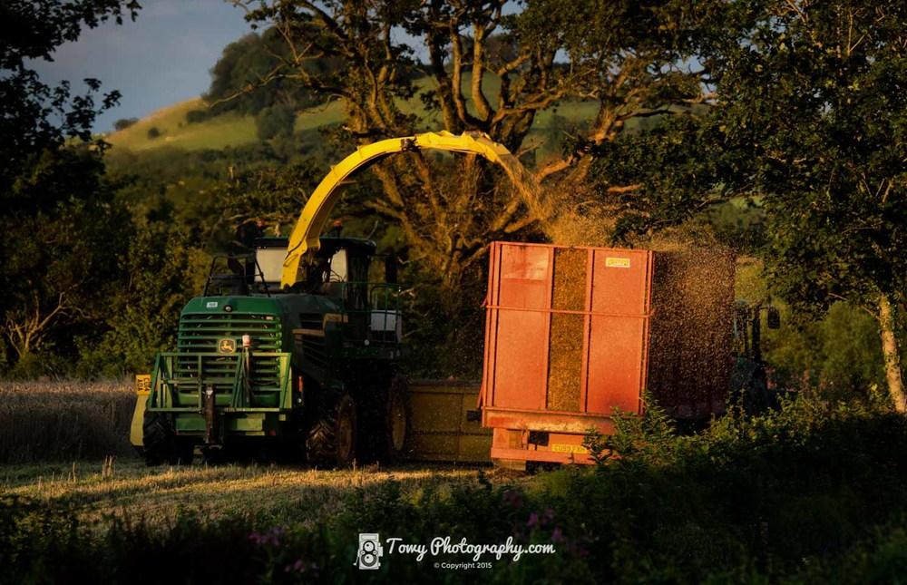 20150807_Farming_Harvest-2.jpg